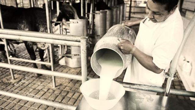El sector lechero enfrenta una grave crisis y preparan una marcha
