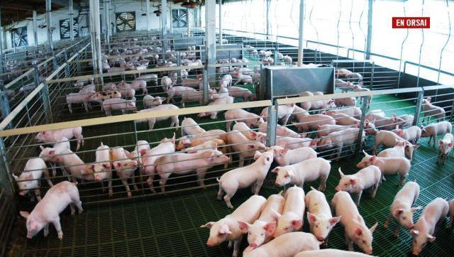 Carne porcina a China: ventajas y potenciales riesgos. ¿Es posible conciliar ambas demandas?