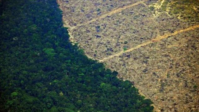 El mundo deforestó el equivalente a toda Suiza en el año de la pandemia