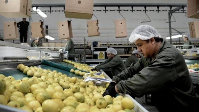 La Unión Europea (UE) confirmó la reapertura de su mercado a los cítricos argentinos