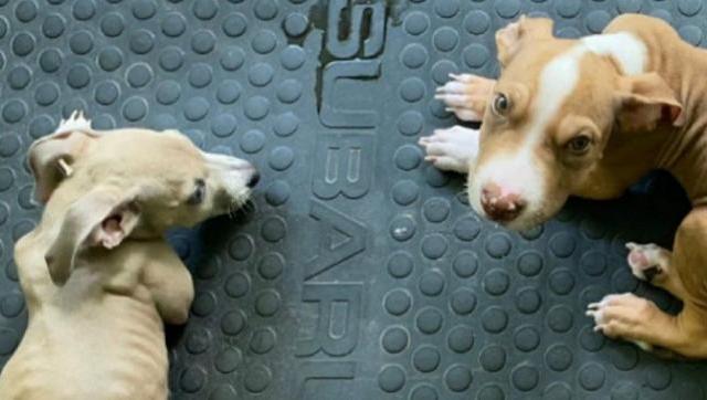 La justicia le prohíbe tener mascotas a pareja de veganos