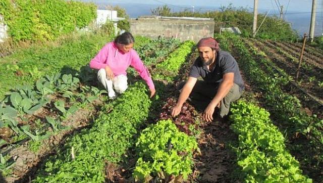 Agricultura Familiar: El Ministerio de Agricultura entregó $150 millones para financiar la producción en San Juan